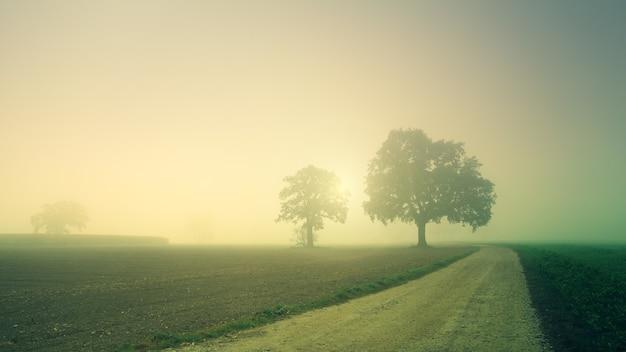 霧のフィールド