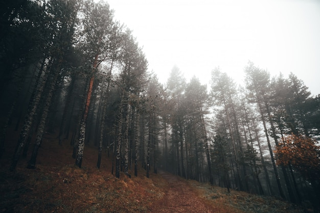 Foggy forest in an autumn morning