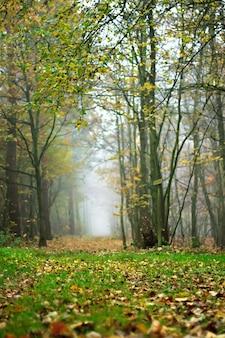 落ち葉で覆われた地面と秋の霧の森