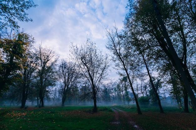 秋の霧の森