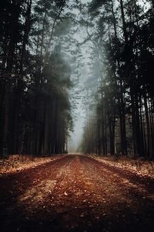 道路のある霧の森の風景