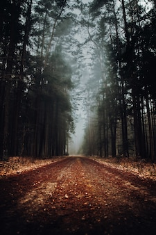 Foggy forest landscape with a road