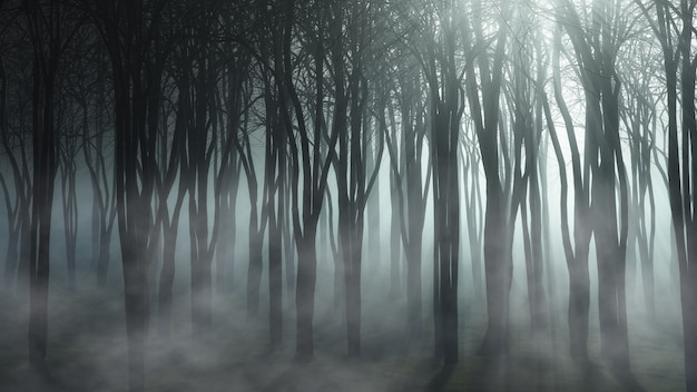 Foggy forest landscape