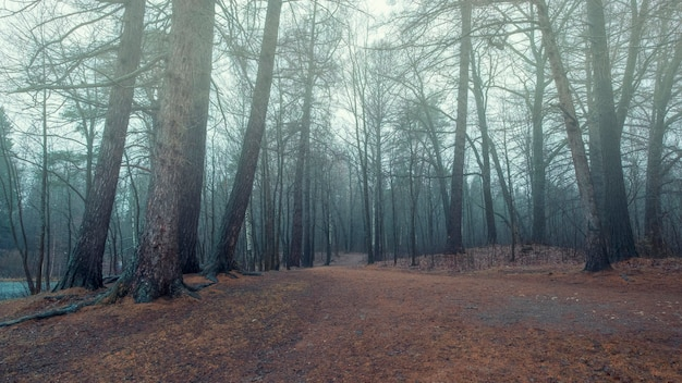 Foggy forest in late autumn with blue haze and fallen red leaves
