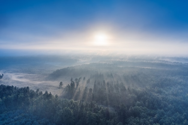 Туманный зеленый сосновый лес с навесами елей и лучи восхода солнца сквозь ветви в осенних горах.