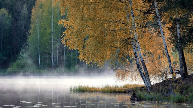 Foggy lake in a birch forest in early morning in the fall