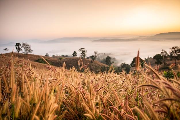 朝の霧の風景の森美しい日の出霧カバー山の背景