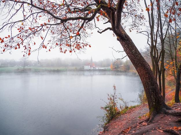 霧の風景。湖畔の大きな木と遠くの古城の晩秋の景色。ソフトフォーカス。ガッチナ。ロシア。