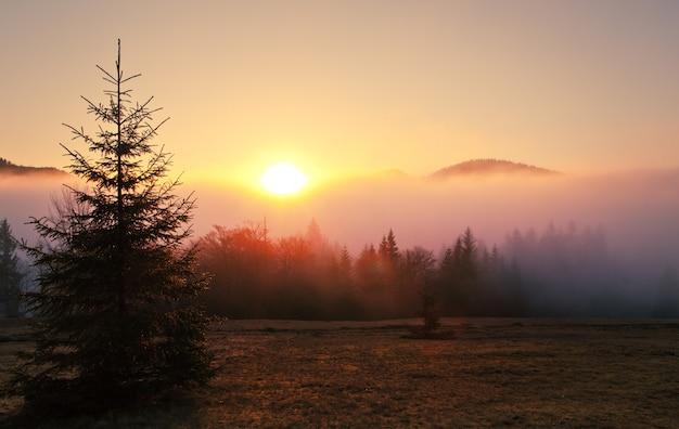 Туманный пейзаж еловый лес в тумане
