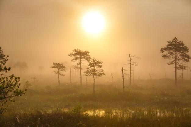 Туманное утро на уникальном болоте ельня (беларусь)