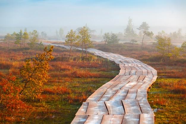 ベラルーシのエリニャ湿地での霧の朝