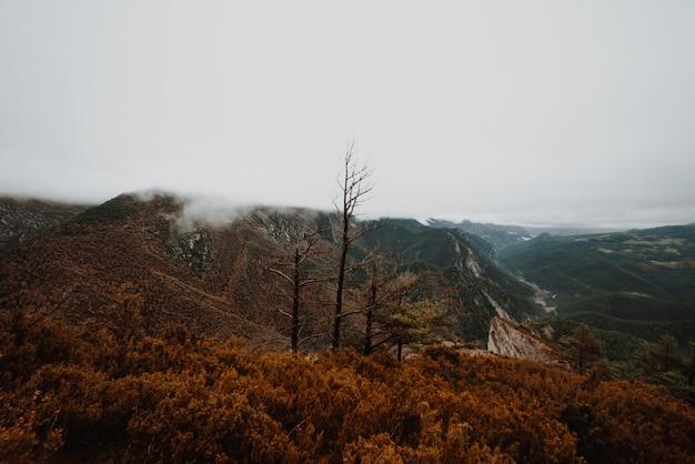 Туманное утро в осеннем лесу