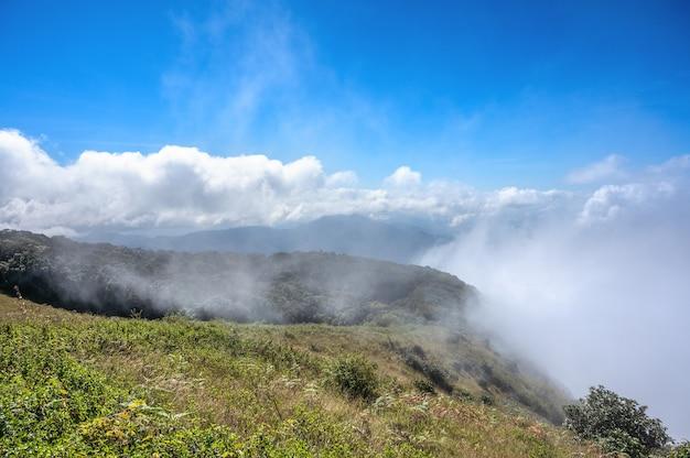 치앙마이 도이 인타논 국립공원(doi inthanon national park)의 큐 매 판(kew mae pan) 산에서 안개가 자욱한 아침. 태국의 하이킹 코스.