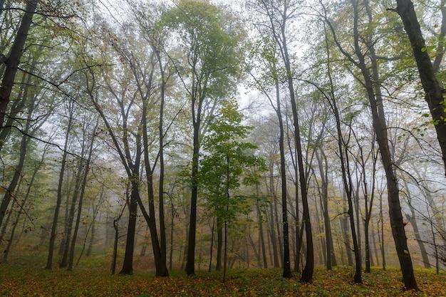 가을 공원 아름다운 풍경에 안개가 아침