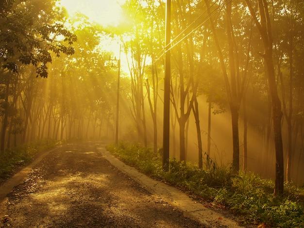 Туманная дорога и солнечный свет