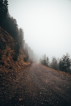 Foggy road in a local forest