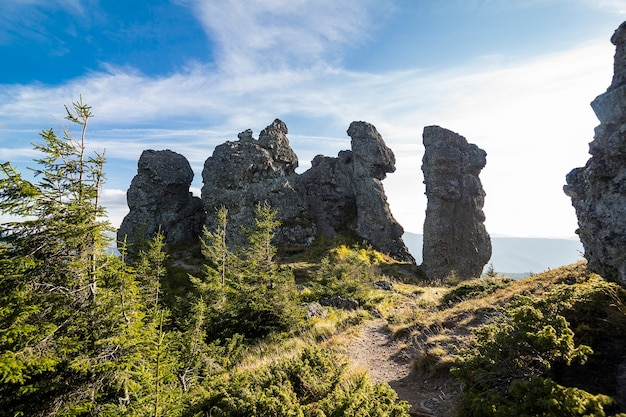 Mattina nebbiosa d'estate in montagna. carpazi, ucraina, europa. mondo della bellezza.
