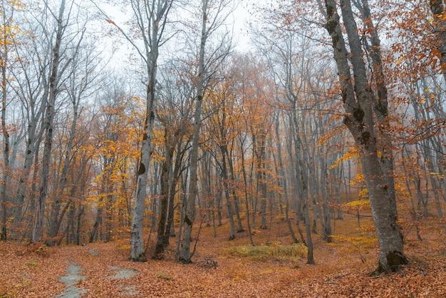 안개가 자욱한 노란 가을 숲 풍경