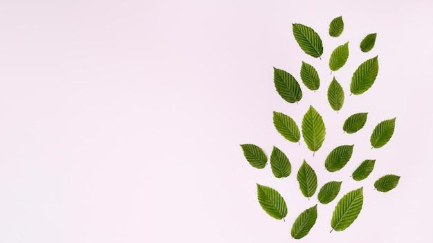 Foliage arrangement forming a leaf
