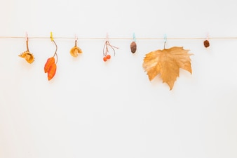 Foliage hitched on string