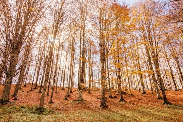 Листва в национальном парке монти симбруини, лацио, италия.