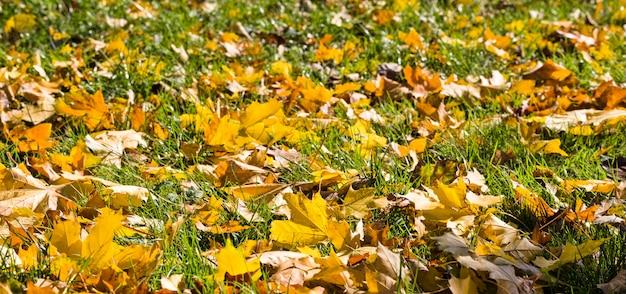 初秋の地面に横たわる葉、紅葉の美しい自然が自然に落ちる