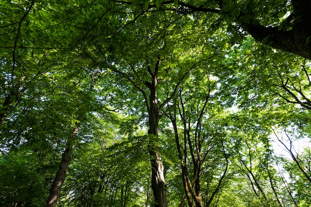Листва деревьев освещена ярким солнечным светом.