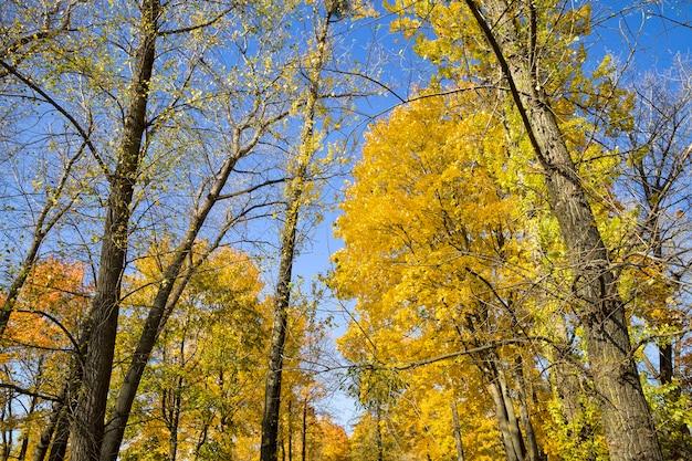 Листва на земле ранней осенью