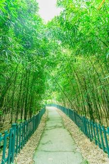 단풍 줄기 대나무 녹색 야외