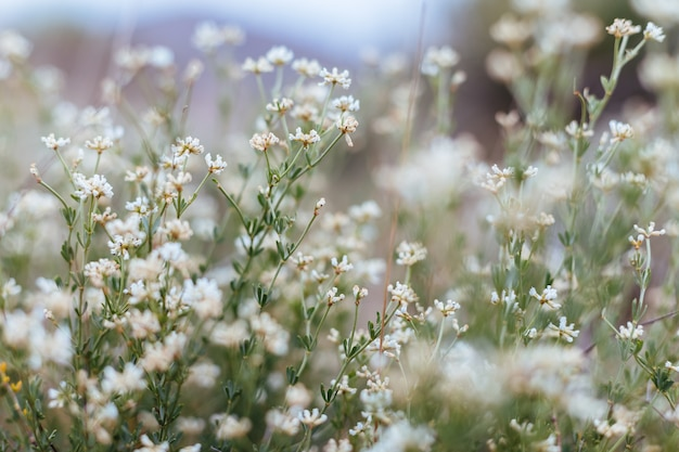 Fondo de plantas y flores del bosque。