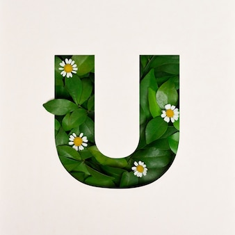 Font design, abstract alphabet font with leaves and flower, realistic leaves typography - u
