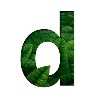 フォントリーフdは、リアルな生きた葉で作られた、貴重な紙の形をした葉です。