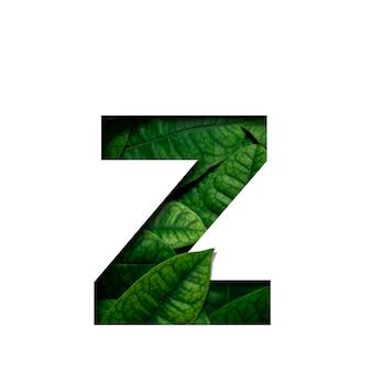 フォントは、貴重な紙の形をしたリアルアライブの葉で作られたzを葉します。