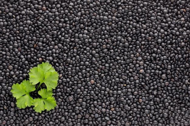 健康的な乾燥黒レンズ豆の食品と料理の背景。