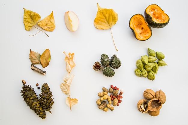 Пища, листовки и стробилей на белом фоне