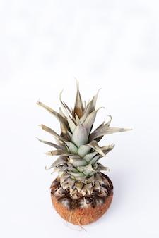 음식, 미니멀리즘, 색상, 정물 및 자연 개념-흰색 배경에 신선한 파인애플과 코코넛
