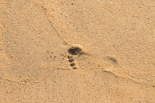 Foot print of child on the beach background