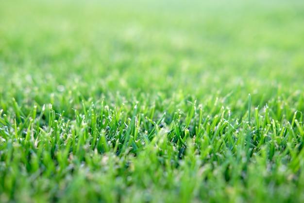 サッカーフィールドの芝生の背景