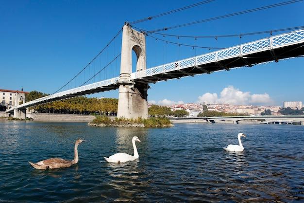 歩道橋と白鳥