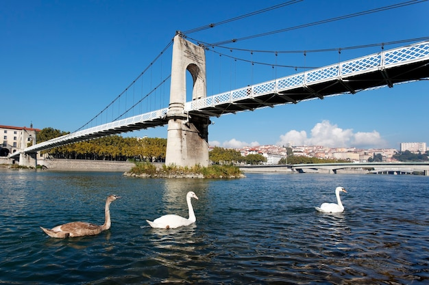 Footbridge and swan