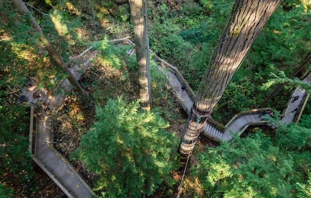 Пешеходные мосты в парке подвесных мостов капилано, северный ванкувер, канада