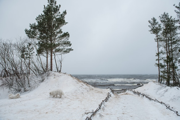 ラトビアのサウルクラスチにあるバルト海の砂丘間の小道