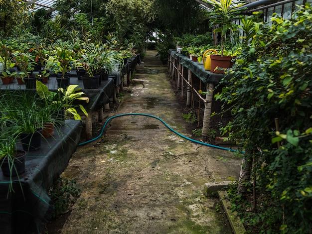 温室のランク間の歩道。鉢の観葉植物が温室のテーブルの上に立つ