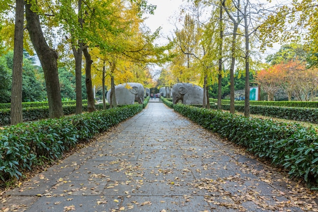 Footpath by statues at ming xiaoling mausoleum