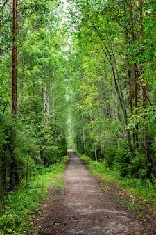 Footpath in dense forest. vertical.