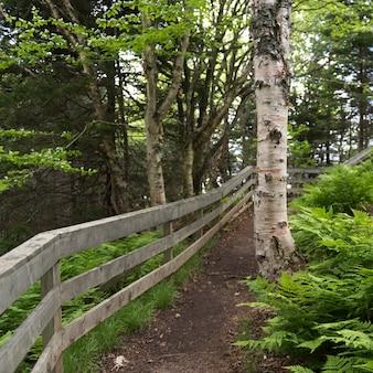 Footpath in fundy national park, alma, new brunswick, canada