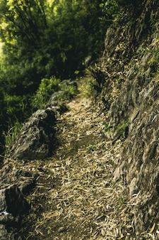 Sentiero verde in anticipo bosco di bosco di betulla