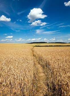 畑の小道-農地の小さな踏みつけられた小道