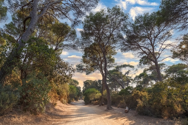 여름날의 산길 자연 환경 생태 개념 porquerolles france