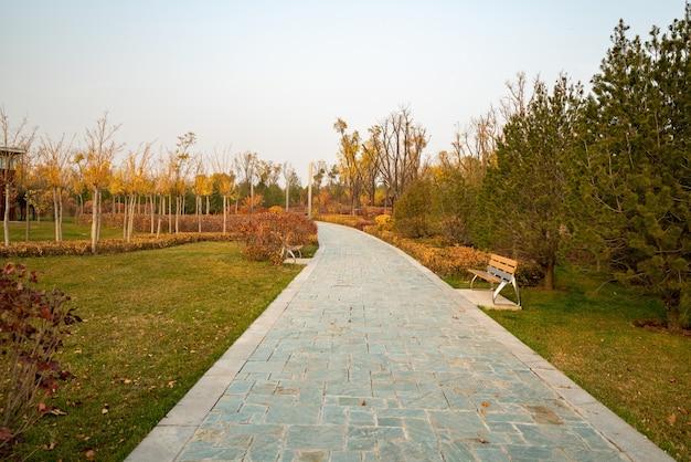 秋の公園の小道